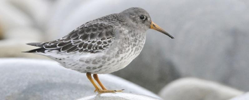 Centre de compétences en ornithologie