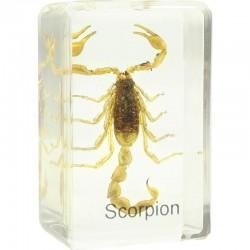 Préparation permanente de scorpion